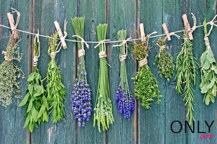 Domowa apteczka – lecznicze właściwości roślin