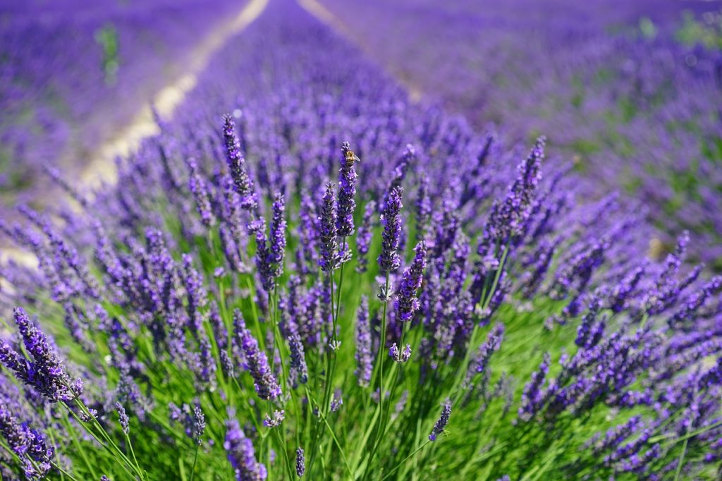Aromaterapia – zapachy, które wpływają na dobry nastrój i zdrowie