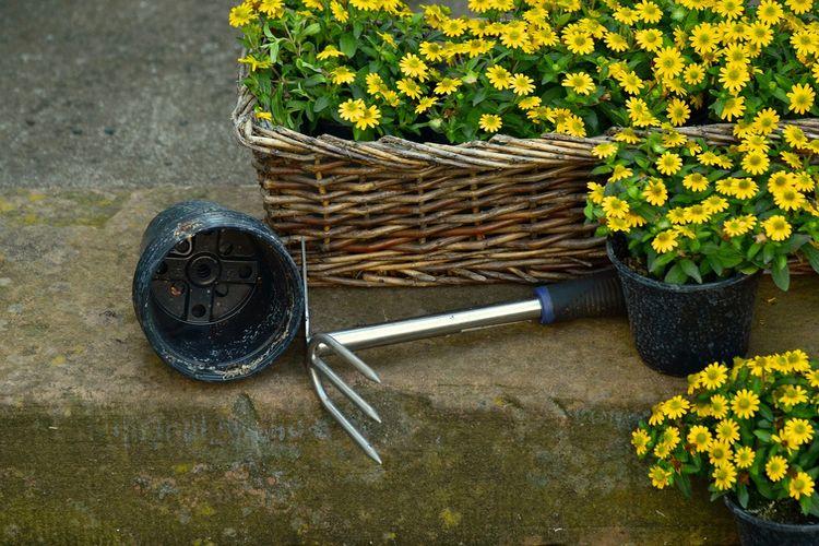 DIY: Domowe sposoby na piękny ogródek