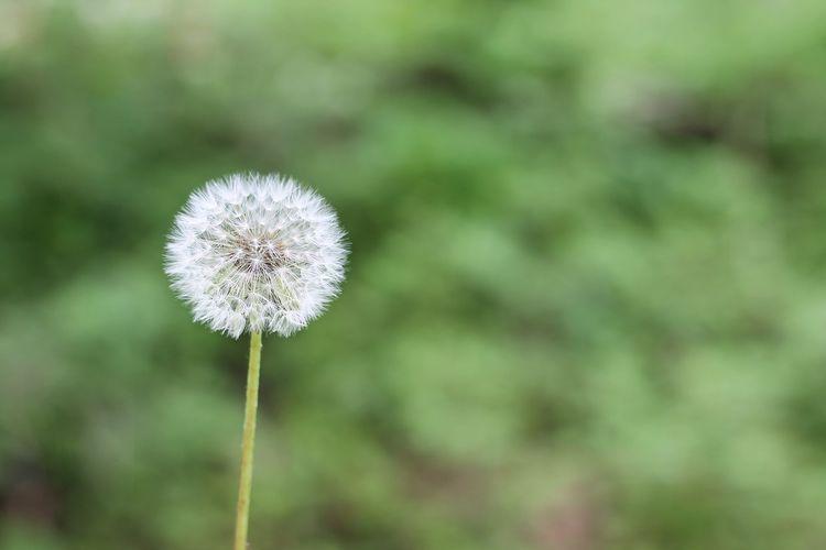 Jak rozróżnić katar od alergii