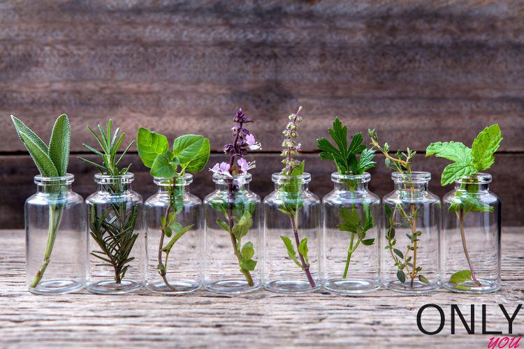 3 bardzo zdrowe zioła