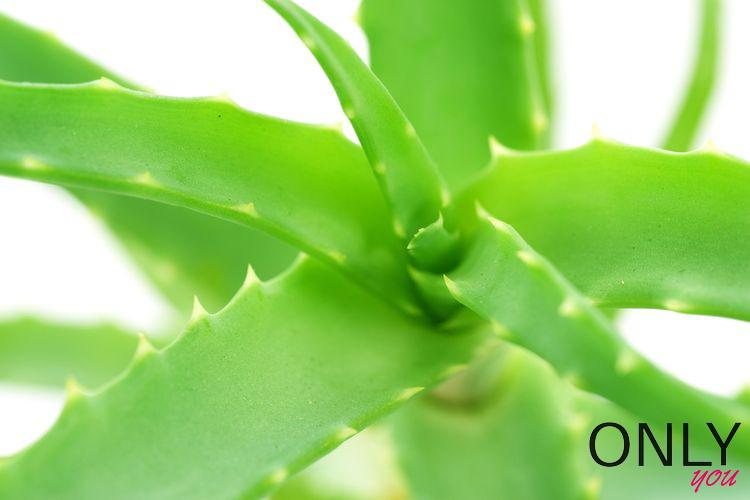 Aloes na piękne włosy i zdrową skórę