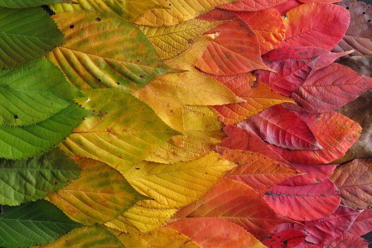 Jak poradzić sobie z jesiennym przesileniem?