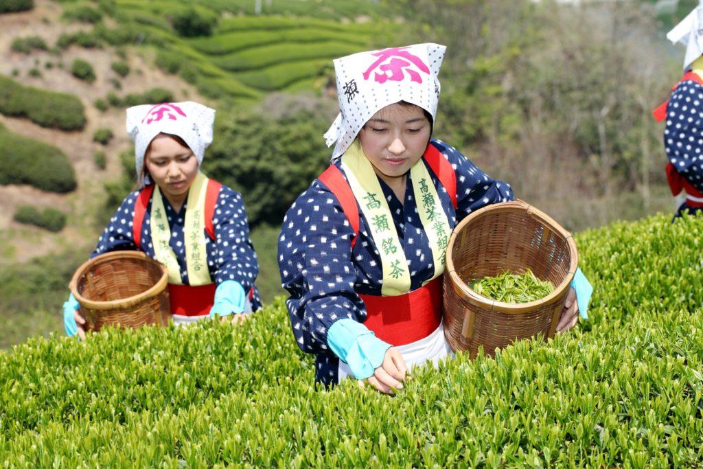 5 kuracji z zieloną herbatą