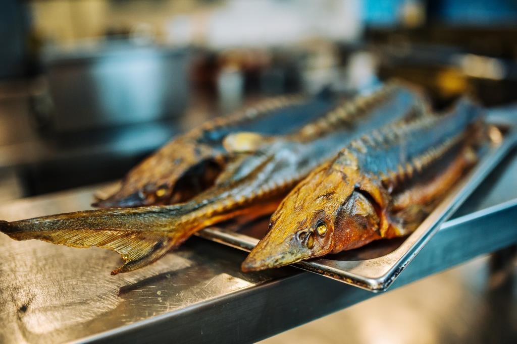 Jesiotr. Ryba pełna zalet