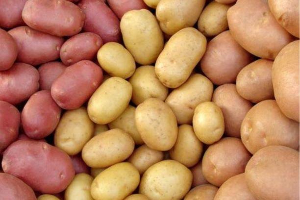 Sekrety ziemniaków – co kryje się pod skórką?