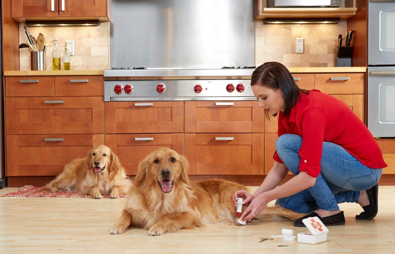 Pies w domu – jak przygotować dom na jego przybycie
